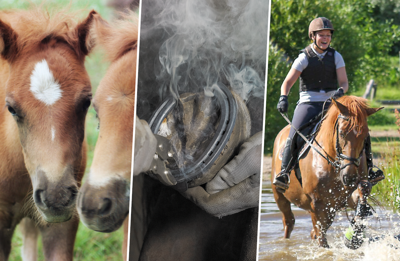 Hevosalan kuntavaaliohjelma keskittyy teemoihin, joissa tuodaan esille hevosen ja hevosalan merkitystä yhteiskunnalle.
