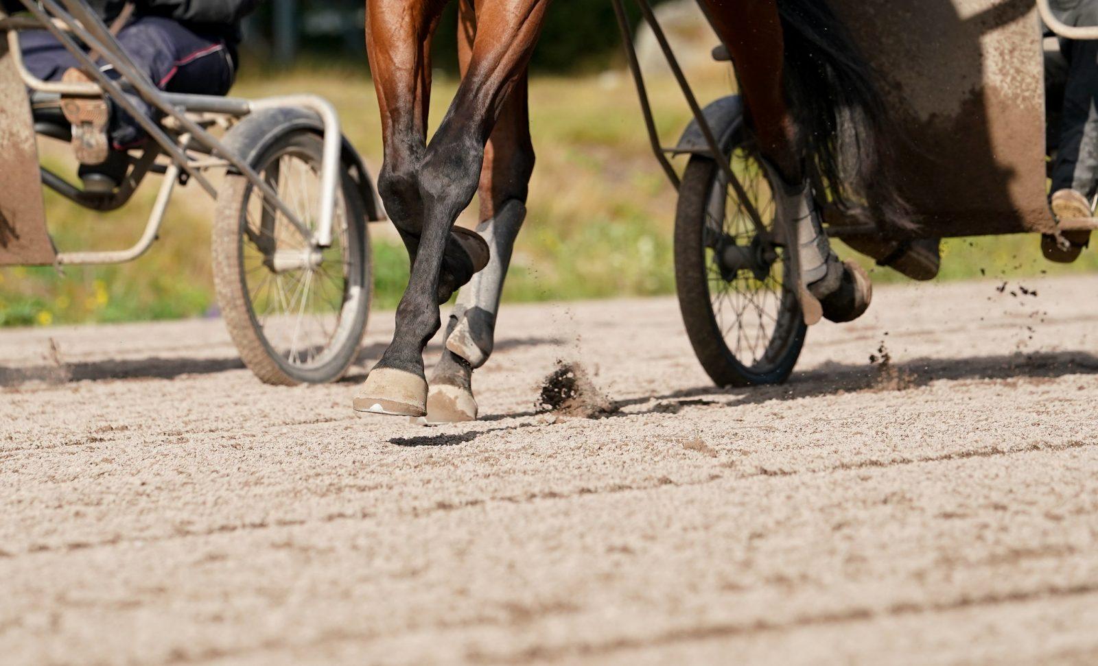 yleiskuva hevosen jaloista