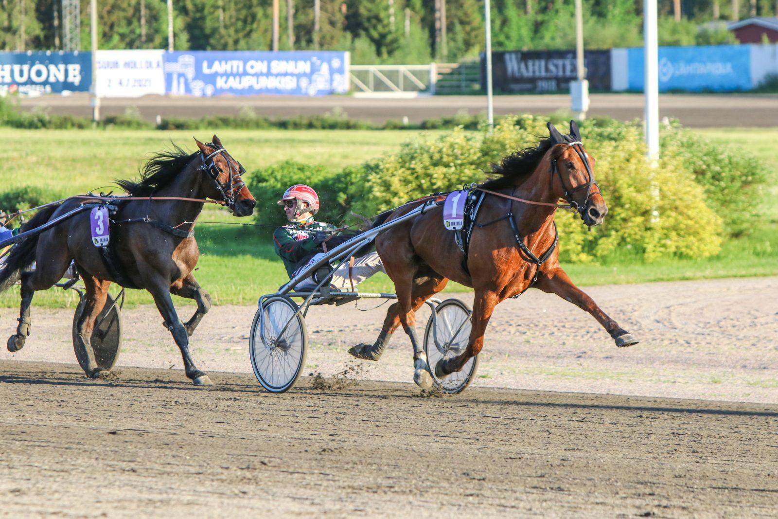 Lake's Action on toinen Ville Hakalan valmentamista Suur-Hollola -välieriin starttaavista hevosista. Kuva:Hippos/Juho Hämäläinen
