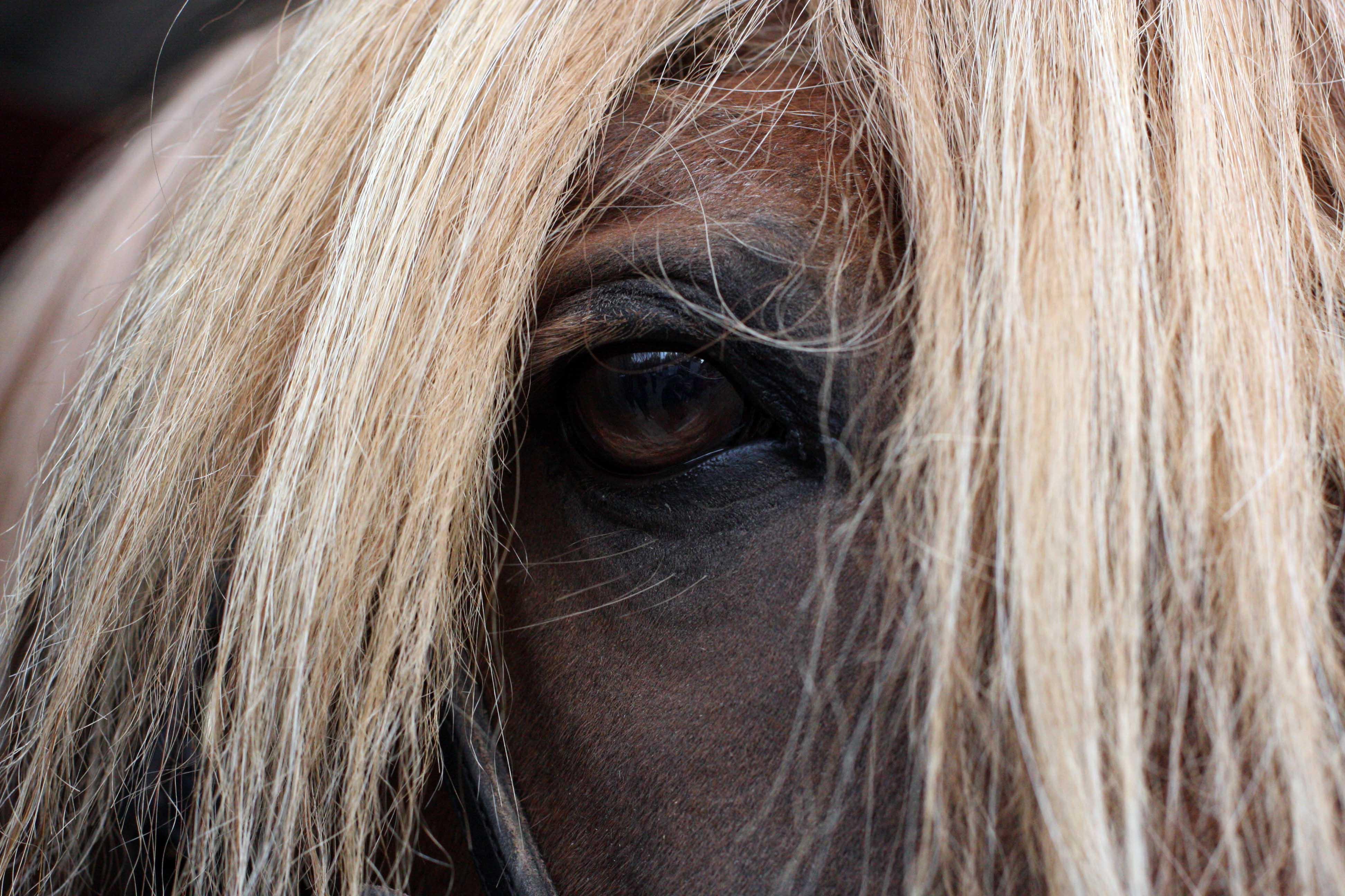 Kuva Suomenhevosriin silmästä