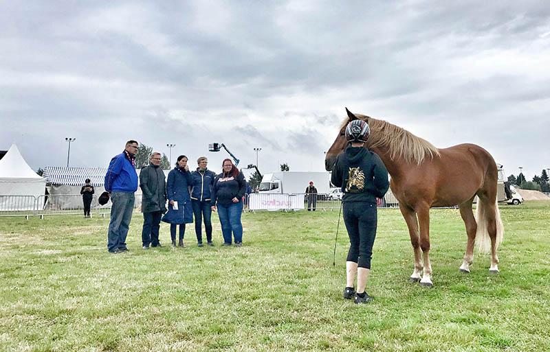 Kuvituskuva näyttelyistä, hevonen lautakunnan edessä
