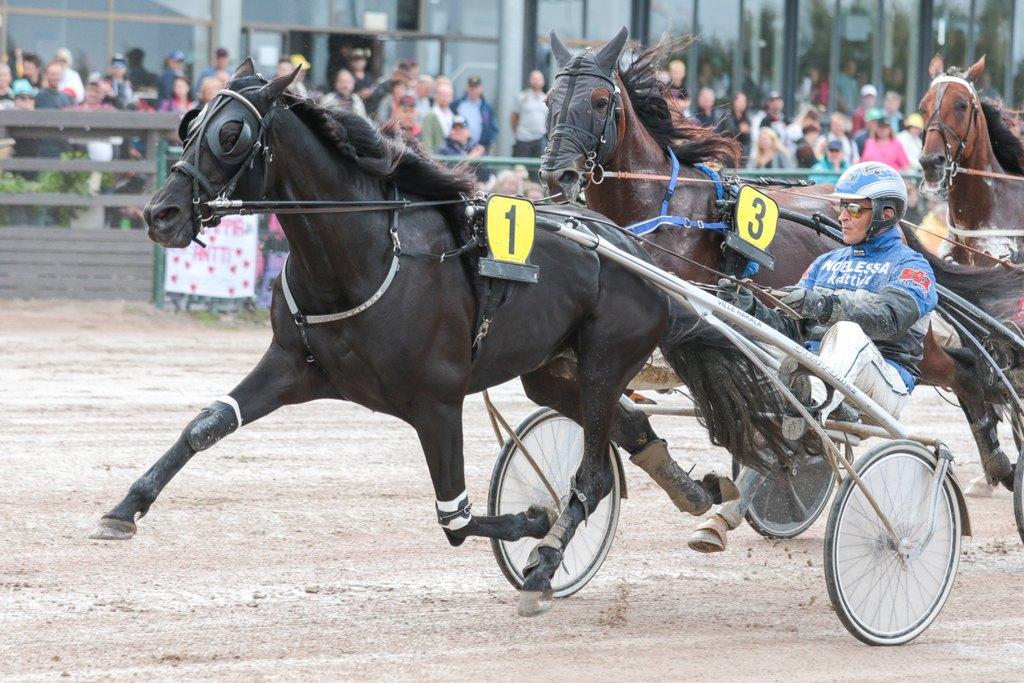 Kuva puolipääaisasta hevosella
