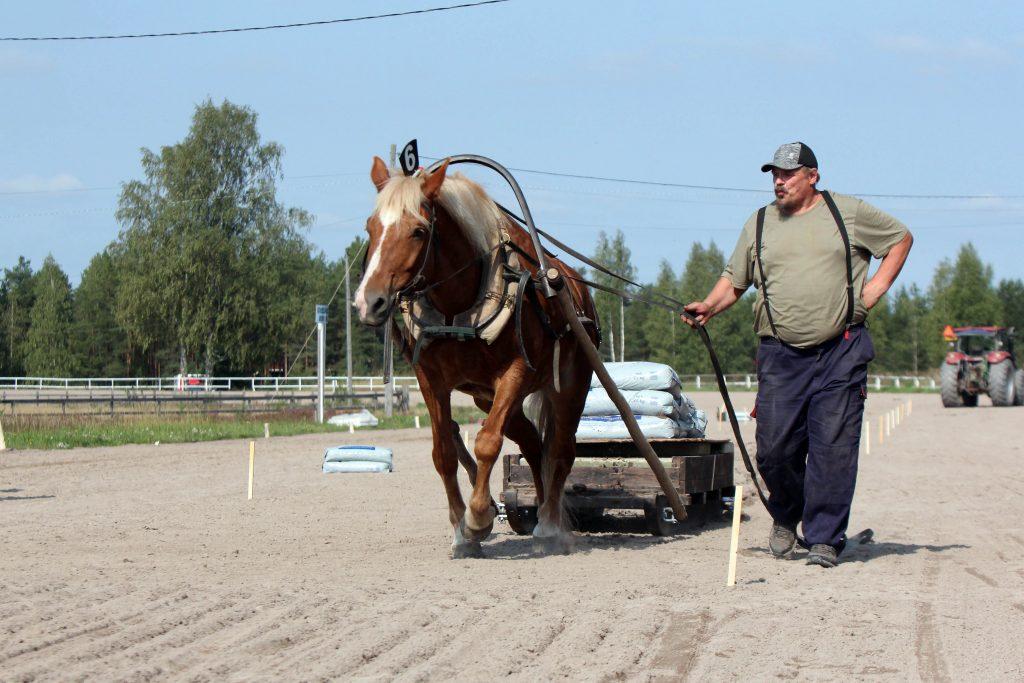 Mikko Uusimäki ja Luomutar vetokokeessa