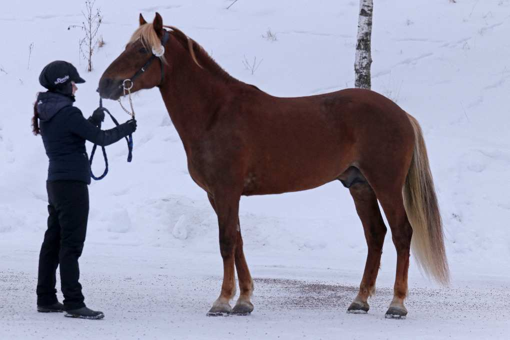 Parvelan Ratu seisoo rakennekuvassa talvella